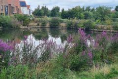 Joseph Rowntree Lake 2